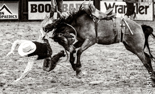 Jackson-Hole-Rodeo-Bronc-Ride